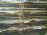 kandang sederhana puyuh petelur (7)
