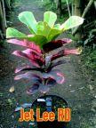 wpid-img_20150705_37355.jpg