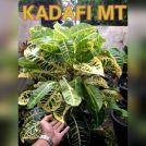 wpid-kadafi-5-mt.jpg.jpeg