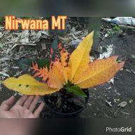 wpid-nirwana-mt.jpg.jpeg