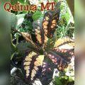 wpid-quinna-mt.jpg.jpeg