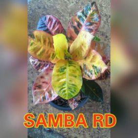 wpid-samba.jpg